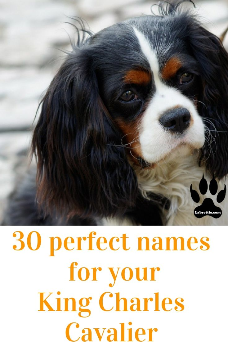 400 Boy Dog Names A Z Cute Names For Dogs Dog Names Girl Dog