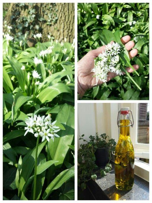 ☆ DASLOOKOLIE OF -AZIJN Ingrediënten: - 10 daslookbloemen - 2 daslookbladeren - 5dl olijfolie Bereiding: Spoel de bloemen en de bladeren schoon en dep ze droog. Snijd de blaadjes in grove reepjes en doe ze samen met de bloemen in een schone glazen fles. Vul de fles af met olie of azijn. Twee tot vier weken laten trekken op een koele, donkere plaats. Daarna zeven en overdoen in een andere (schone) fles. De olie/azijn krijgt een lekkere knoflooksmaak. Ongeveer negen maanden houdbaar.