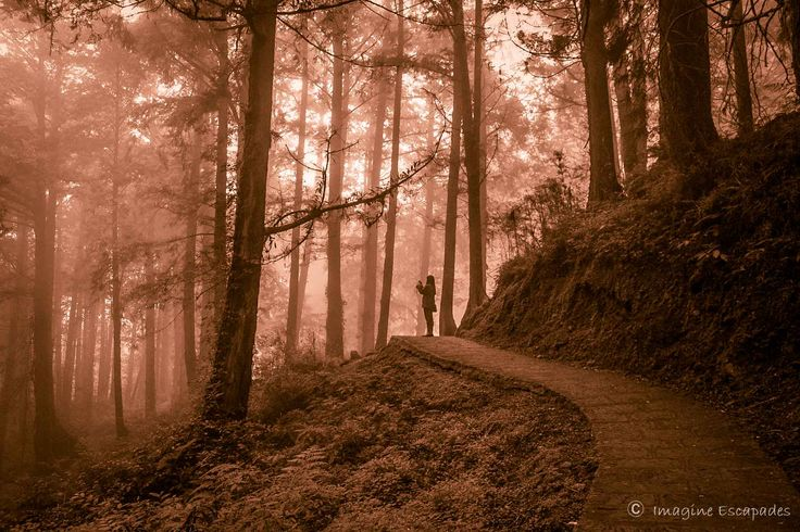 High above in the mountains, Alishan is a hill station shrouded in mist, preserving an ancient past