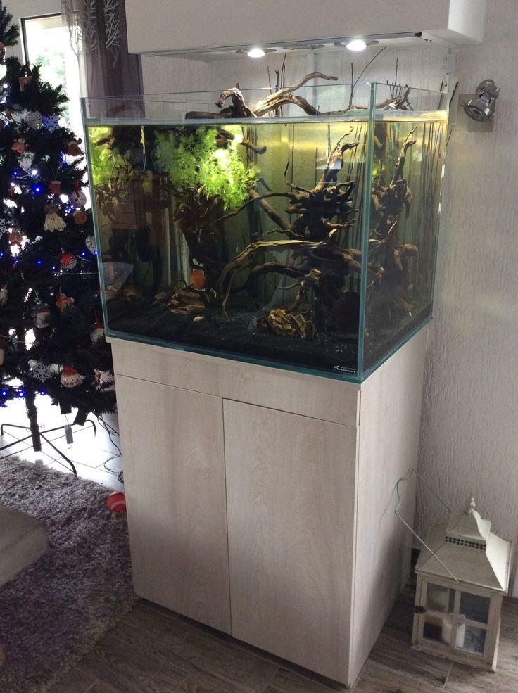 Pinterest the world s catalog of ideas for Aquarium shop