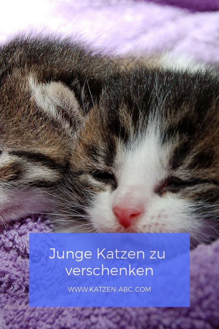 Junge Katzen zu verschenken | Katze zu verschenken, Junge