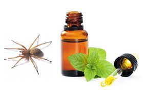 Spiders hate peppermint! Put some peppermint oil in a squirt bottle with a little water and spray your garage and all door frames. - interesting! I knew it helped keep mice away.