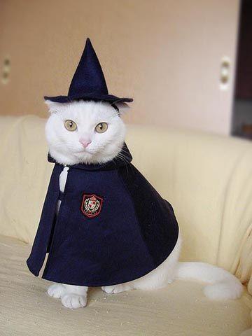 halloween white cat wizard