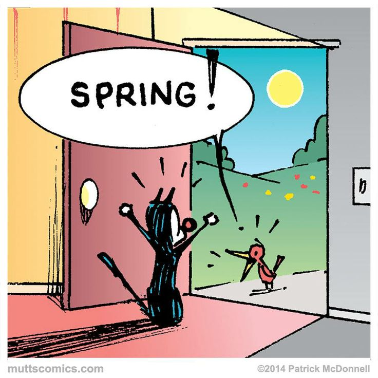 moochie Spring