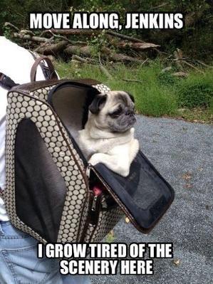 Funny Pug Dog Meme Pun LOL by fay