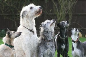 Everything-there-is-to-know-about-dog-sitting-rates-in-home/