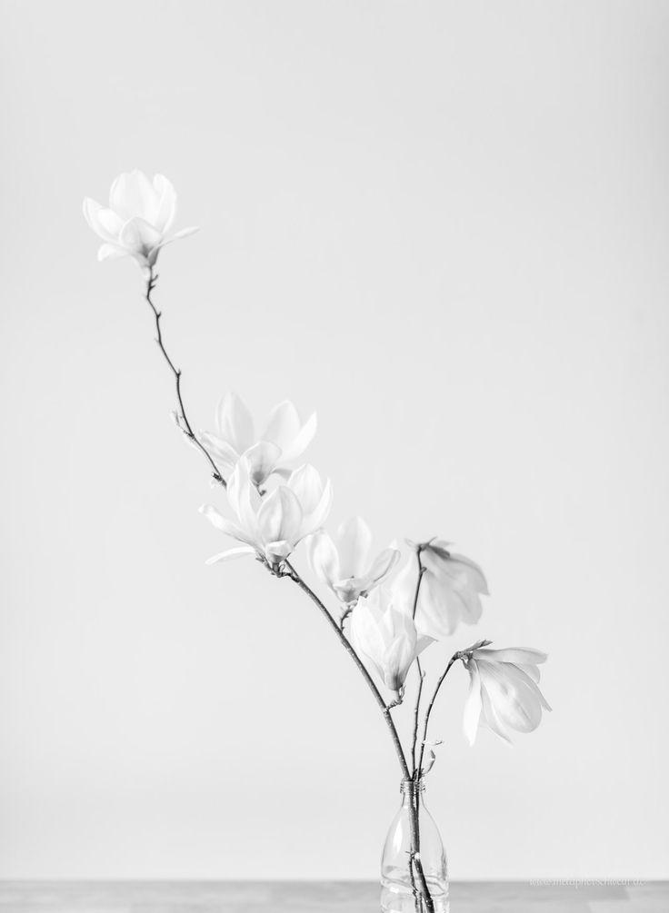 Simple Mag 2016  Simple is beautiful by www.metapherschwein.de  #magnolia #minimalism #simple #minimalistic #monochrome #pure #blossom #interior #decoration