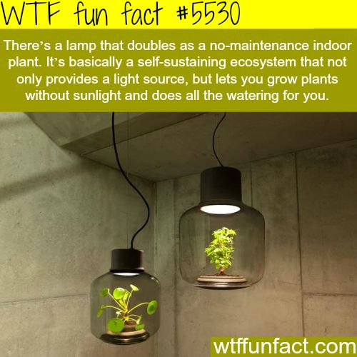 Lamp that doubles as indoor plant - WTF weird & interesting fun facts