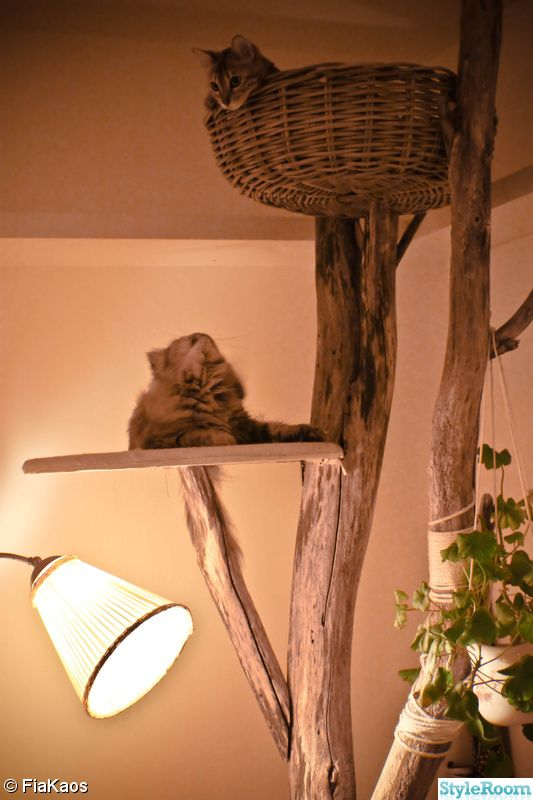 katträd, two-arm lamp, hemmabygge