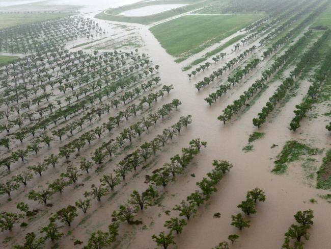 Flooded farmland in Bowen. Picture: Scott Radford-Chisholm