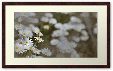 Flowers of a Dream | by Life in Fine Art: Incredible new photographic prints for sale!