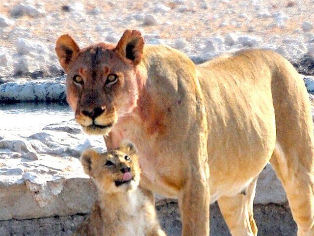 Nice lunch mom? Etosha, Namibia
