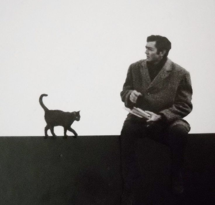 """[Julio Cortázar y Adorno] > [*- Cortázar tenía un gato de nombre """"Teodoro W. Adorno"""", tomado del nombre del filósofo y sociólogo alemán. Julio Cortázar, escritor argentino (1914 - 1984)]"""