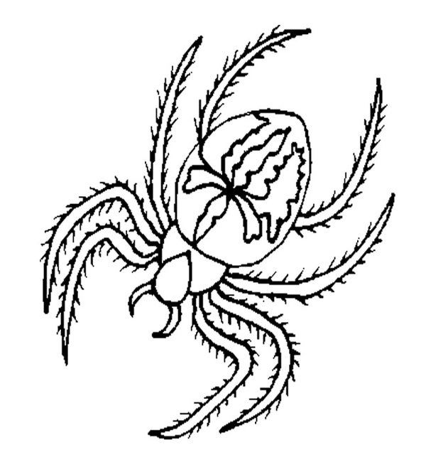55 Crafts Colouring Pages Free Premium Templates Spider Coloring Page Super Coloring Pages Cute Coloring Pages