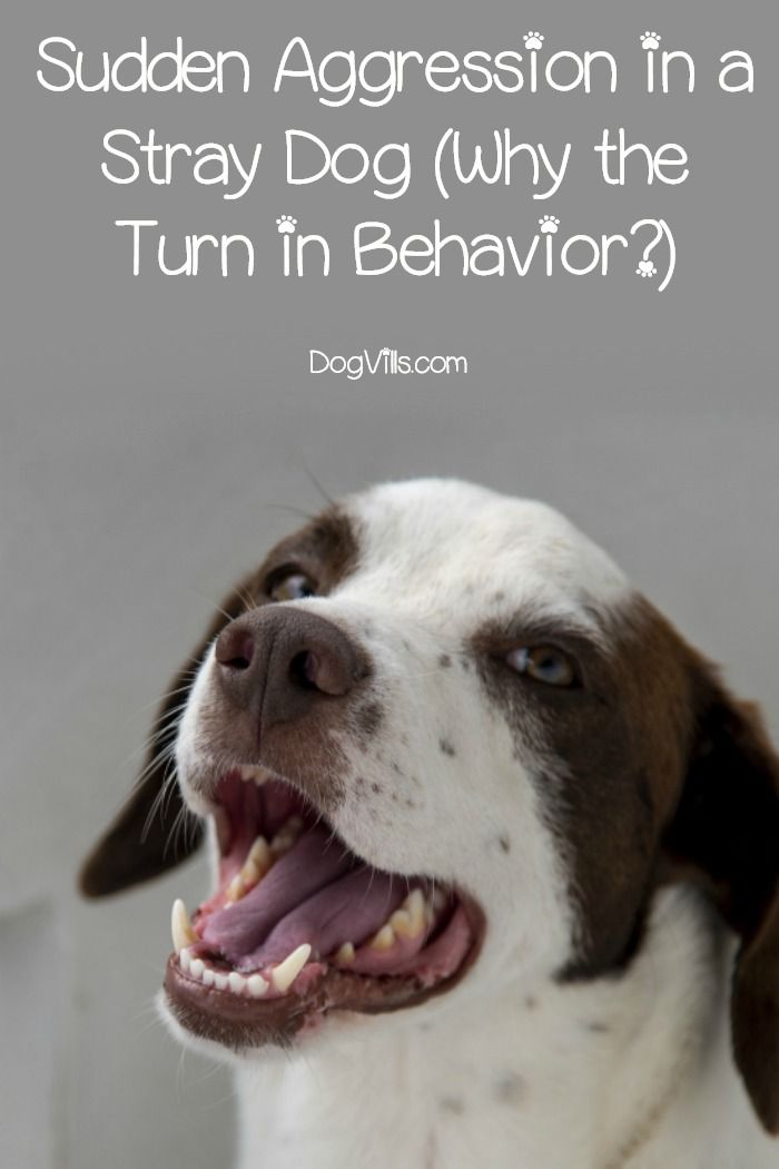Sudden Aggression In A Stray Dog Why The Turn In Behavior
