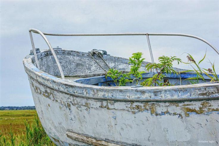 Something draws me back to this old relic of a boat as if she is asking me to save her. #old boats #newjersey #nj #just_nj #boats #slatlife #creeks #marshes #seastheday #fishing #oldfishingboats #wetlands #southjersey #clamming #crabbing #seafood #fishingboats #oldsalt #seacaptain #coastal #coastalimages #coastaldecor #weathered #coastalpalette