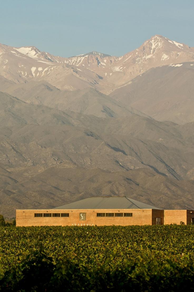 Sophenia´s cellar at the foot of the Andes  http://www.bormidayanzon.com.ar/bodegas/sophenia