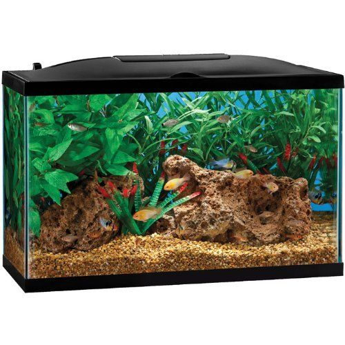 1000 ideas about cheap fish tanks on pinterest for Fish tanks cheap