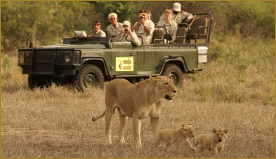 East Africa is one of the most popular destinations for wildlife animals. Tourists can watch rarest of rare wild animals, flora and fauna in Africa. East Africa Safari arranges the cheap wildlife safari packages for families and honeymoon couples to enjoy holidays. Contact on 254 727478845 to get best travel to Ngorongoro safari, Kenya and Tanzania safari, Serengeti safari and east African safari. http://www.east-africa-safari.com/5%20Days+lakeNakuru+lakeNaivasha+MaasaiMara+LodgeSafari.htm