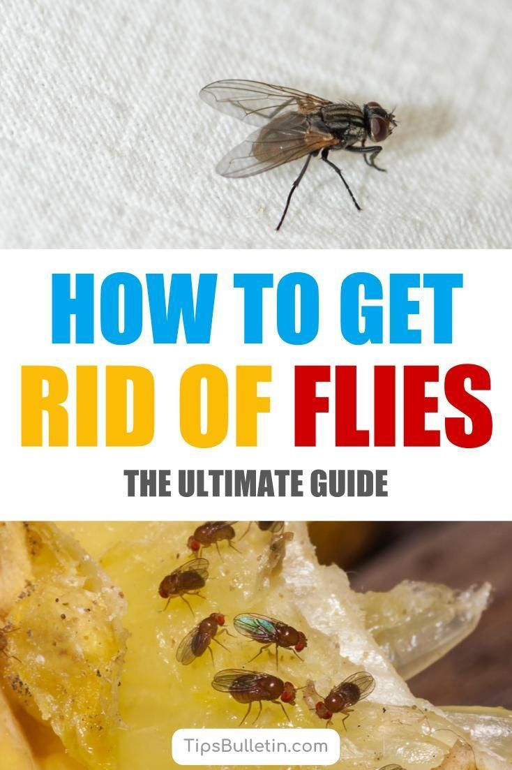 6 Clever Ways To Get Rid Of Flies Get Rid Of Flies Homemade Fly Traps Diy Fly Trap