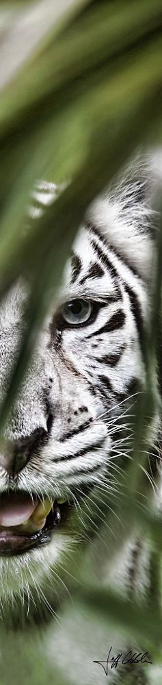 Old Blue Eyes by Jeff and Michelle Cobble on 500px