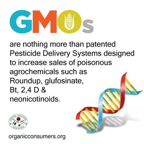 roundup and monsanto essay Monsanto's genetically modified seeds have transformed the company and are radically altering global agriculture so far, the company has produced gm seeds for soybeans, corn, canola, and cotton.