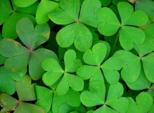 We have reached the end of the rainbow and luck is on our side. The hunt to find gluten-free recipes for St. Patrick's Day is over! This year, don't be green with envy – join in the celebration of delicious, traditional dishes of Ireland. Avoid getting yourself in a pinch and try these recipes that …