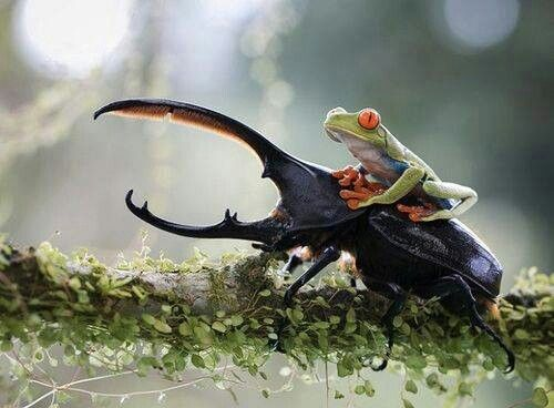 Amazing Photo!!  Who wouldn't want a ride like this?!