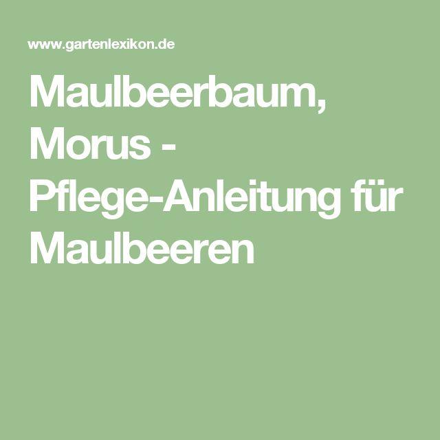 Maulbeerbaum, Morus - Pflege-Anleitung für Maulbeeren