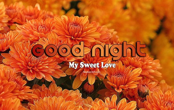 Good Night Wishes Images Free Download