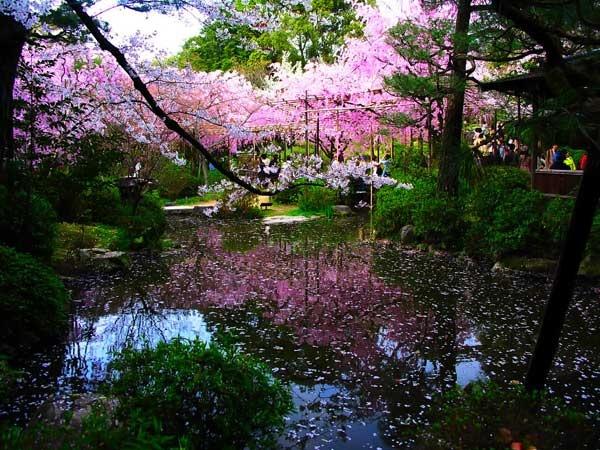 Japan Garden Flowers: Zen Garden - Spring