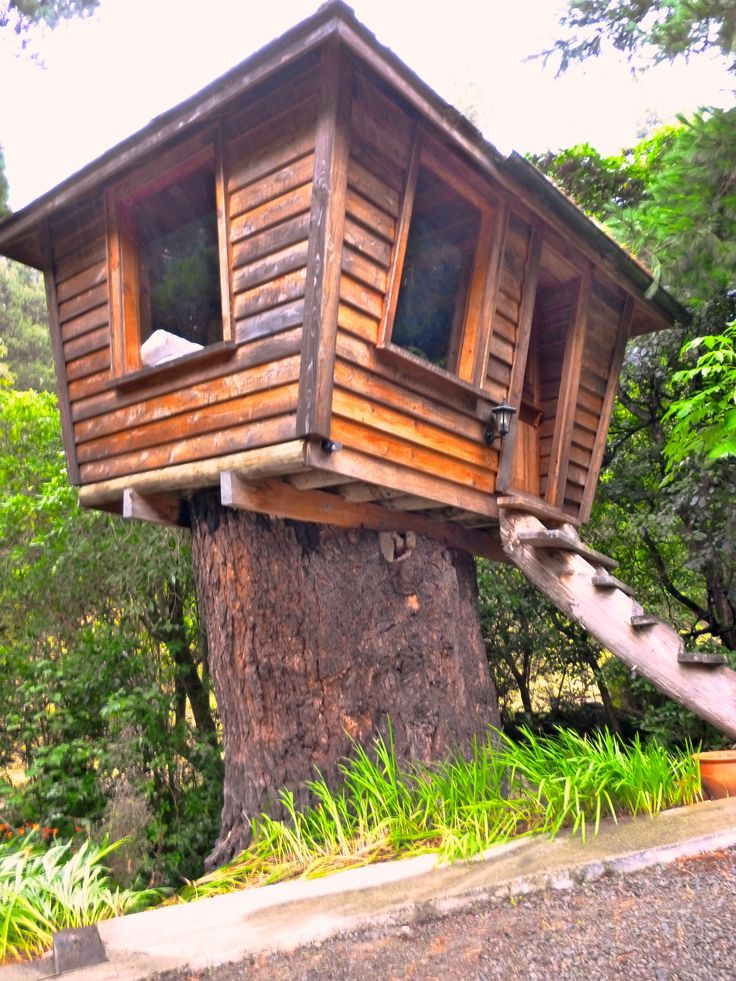 A tree-stump house to stay in near Chiristchurch, NZ