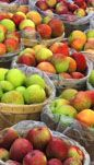 Apple Jack Orchards, Delano, Minnesota. Pick your own apples and raspberries. Visit upickfarmlocator.com to find more U-Pick Farms near you. #upickapples #gopicking #delanominnesota