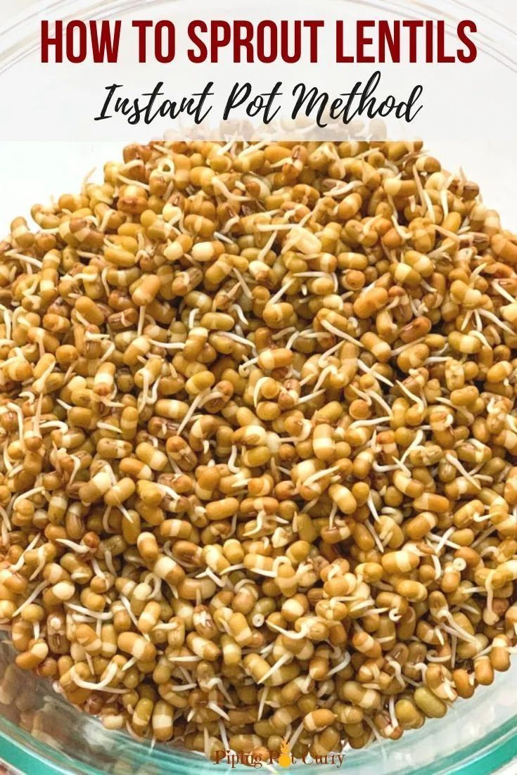How To Grow Sprouts Lentils Beans Recipe Growing Sprouts Sprouts Beans