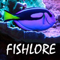 181 best images about fish tank on pinterest for Fish tank riddle