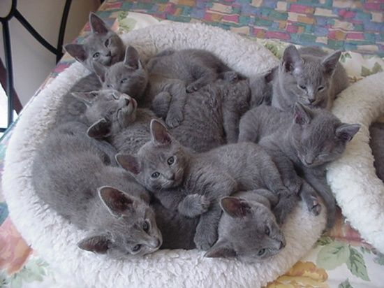 basket of gray cats! I want!.