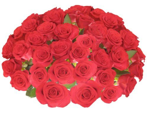 Flowers for Delivery - 50 Giant, Incredibly Fragrant Long Stem Red Roses with FREE GIFT MESSAGE From Spring in... $99.99