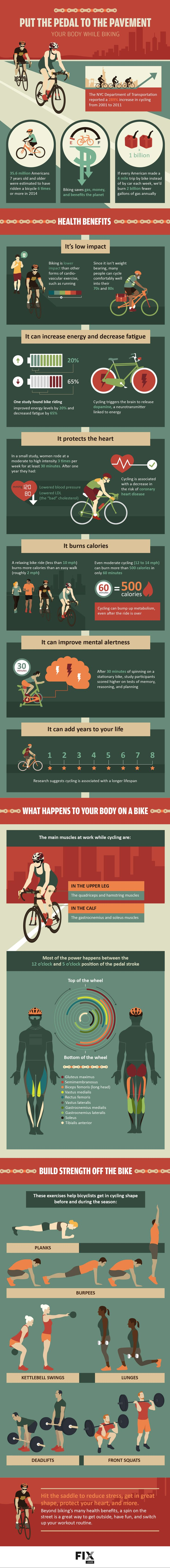 What REALLY Happens To Your Body When You're On A Bike (Infographic) #movenaturally #livelongerbetter #bluezonesproject