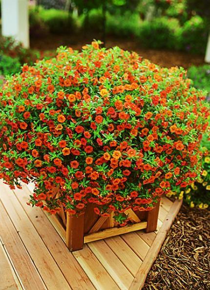17 meilleures id es propos de plantes retombantes sur for Plantes et arbustes vivaces