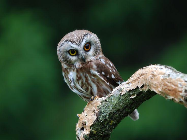 Cute owl wallpaper 1024x768