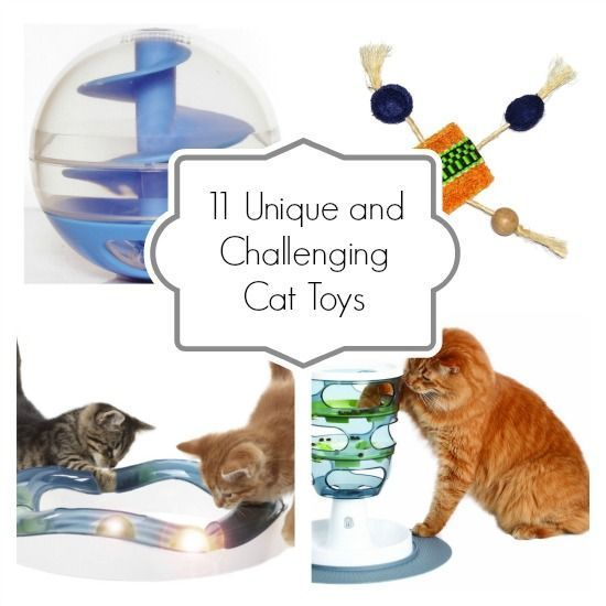 11 Unique And Challenging Cat Toys With Images Best Interactive Cat Toys Cat Brain Cat Toys