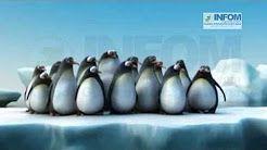 video motivacional pinguinos - YouTube