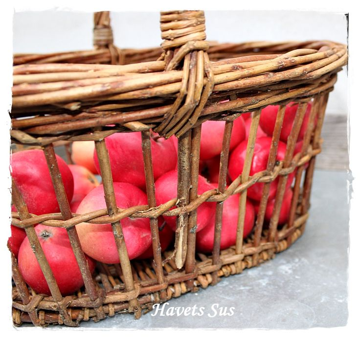 Havets Sus, My garden, apple, autumn