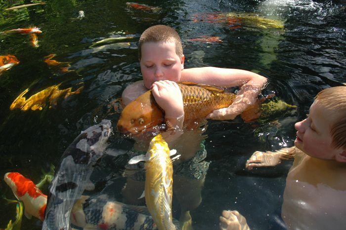 1000 images about koi pond obsession on pinterest for Garden pond reddit