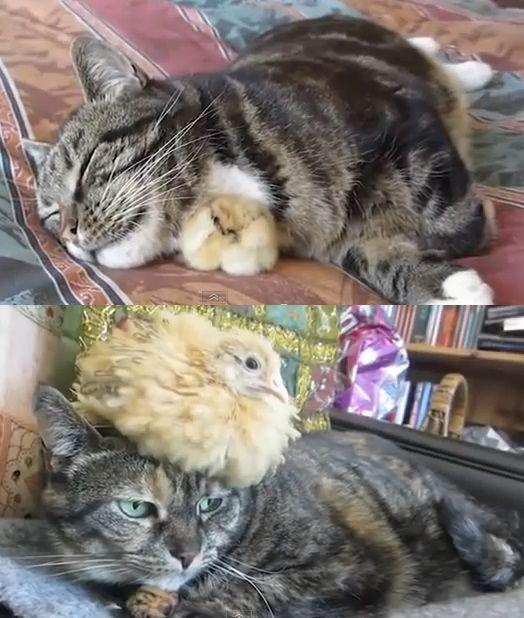 【30枚】猫の昔と今の比較画像貼る : あじゃじゃしたー