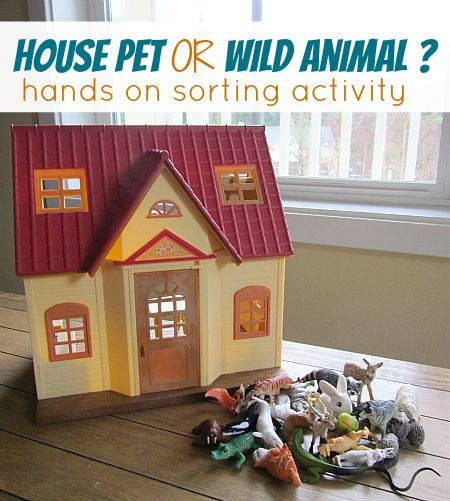 Pet vs wild animal sorting for preschool . Sorting and play together.