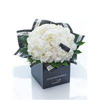 Julien Macdonald Sophisticated White Hydrangea Hand-tied