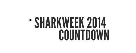 Shark Week Knitting Countdown!