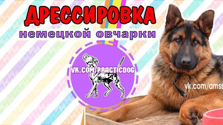 Дрессировка собак Кузнецк | Пенза | немецкая овчарка щенок