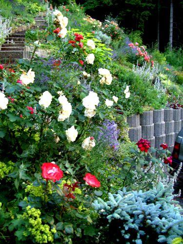 Stunning Bilder von euren Hangg rten Seite Gartengestaltung Mein sch ner Garten online